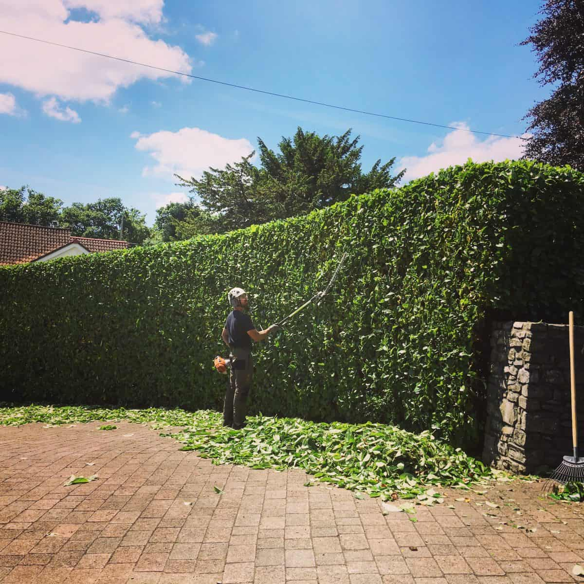 hedge trimming cardiff