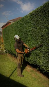 tree squadron hedge trimming in cardiff