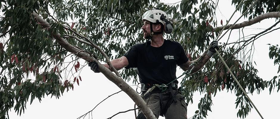 tree pruning cardiff