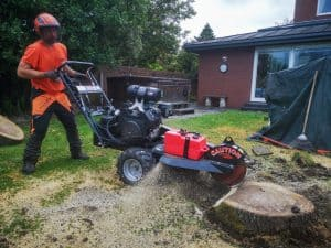 tree stump removal in cardiff