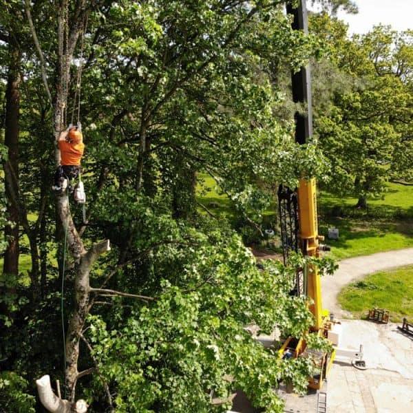 Tree Surgeon Penarth