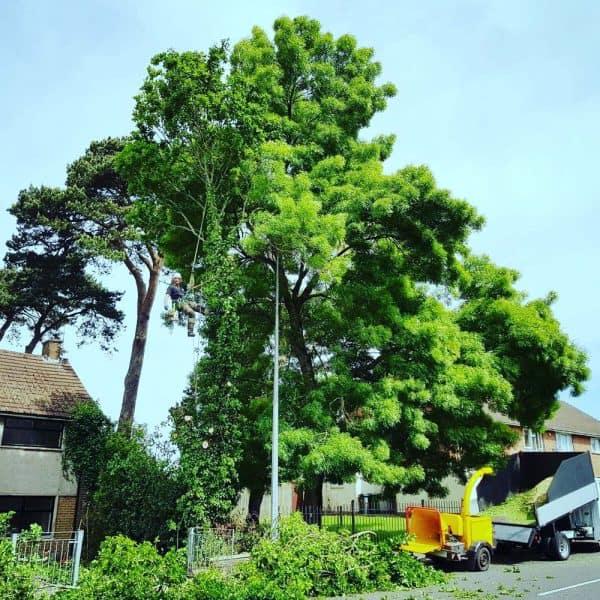 Tree Surgeon In Newport